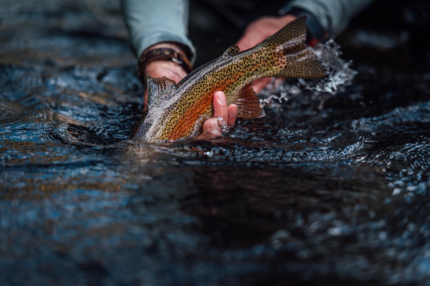 Fishing Smoky Mountains